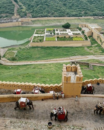 Green Color India Agriculture Amer Fort Animal Themes Architecture Day Domestic Animals Environment Garden Group Of Animals High Angle View History Incredible India Landscape Mode Of Transportation Nature Outdoors Rajasthan Rural Scene Scenics - Nature Transportation