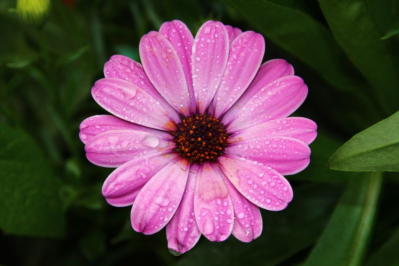 RAINDROPS Pure Nature Pure Beauty Nature ThatsLife Life Happiness Clorful Close-up Garden Garden Photography Urban Gardening Detail Flowering Plant Plant Petal Fragility Freshness Flower Head Vulnerability  Growth Close-up Beauty In Nature Pink Color Nature Pollen Focus On Foreground Drop Water No People