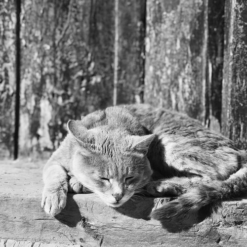 Cat lying in a forest