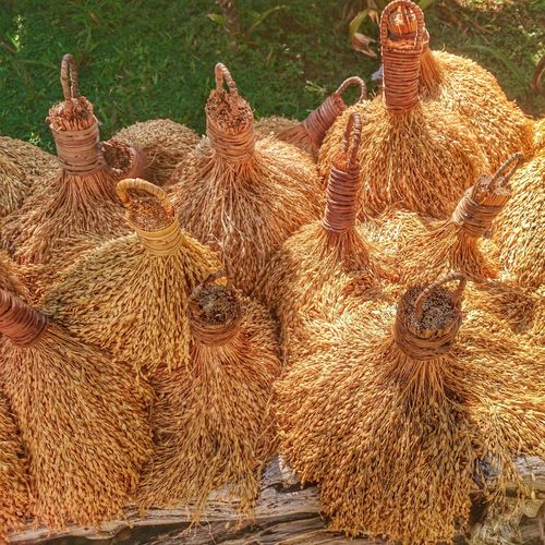 Close-up of harvested rice
