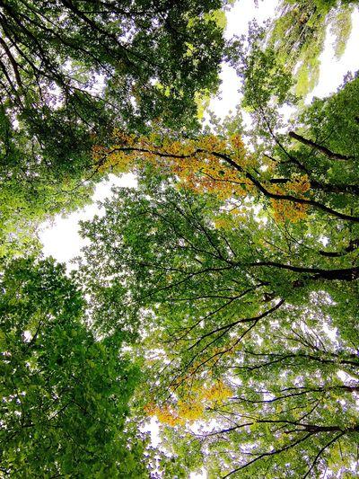 Love Nature Summer Beautiful Enjoying Life Relaxing Taking Photos First Eyeem Photo Eye4photography  EyeEm Best Shots
