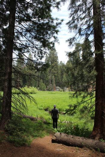 Sequoia Tourist