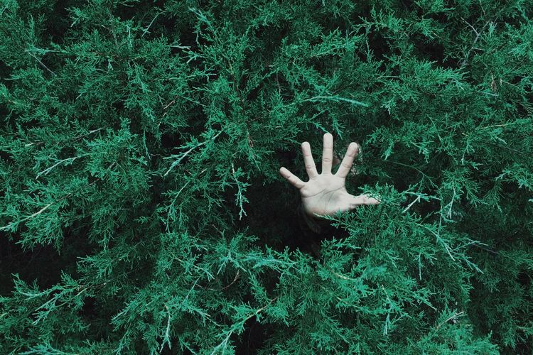 High Angle View Of Hand Coming Out From Bushes