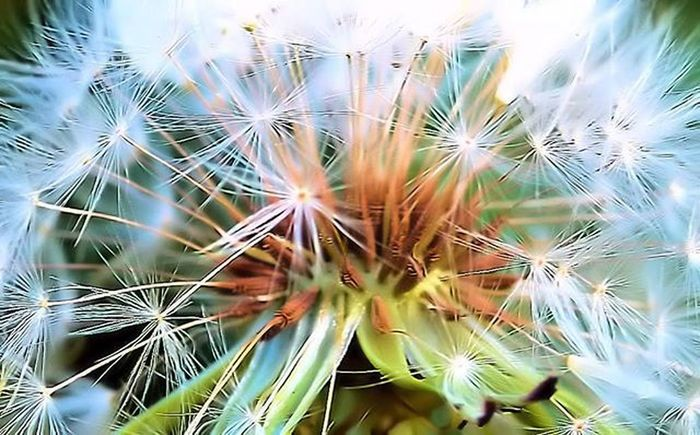 Here is the inner side of Dandelion 2) Twerking_flowers 3) 9flower9 4) Superb_flowers 5) Loves_flowers_ 6) Macro_perfection 7) Bd_flower 8) Af_macro 9) Pocket_family 0) Paradiseofpetals 1) Rsa_macro 2) Petal_perfection 3) Ig_shotz 4) Flowersandmacro 5) Heavenlyflowerz 6) Amateurs_shot 7) Resourcemag 8) Macro_club 9) Macroworld_tr 0) Quintaflower 1) Splendid_flowers 2) Fstoppers 3) Eletric_macro 4) Eye4flowers 5) Wms_macro 6) tv_depthoffield 7) fotofanatics_flowers 8) macroclique 9) show_us_macro 0) nikontop