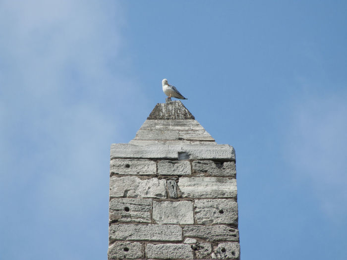 Low angle view of seagull perching on obelisk against blue sky