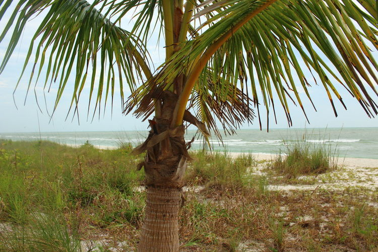 Beach Beauty In Nature Fort Myers Beach Gulf Of Mexico Idyllic Outdoors Palm Tree Palm Tree Sea Tree Tropical Climate