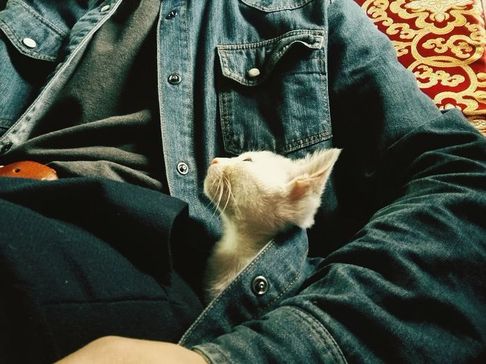 Pets Cat One Animal Animal Themes Domestic Animals Mammal Midsection One Person Indoors  Day One Man Only People Cats Of EyeEm Cat Lovers Catsagram
