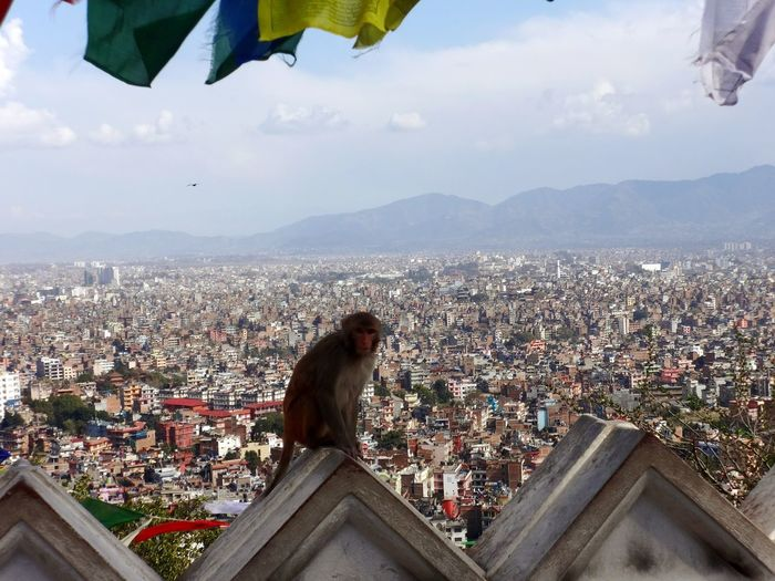 Kathmandu, Nepal Cityscape Travel Destinations Building Exterior City Outdoors Architecture Sky Day Mountain Monkey Eyeem Philippines Landscapes Travel Looking Down The City Crowded City City View  Travel Photography Crowded