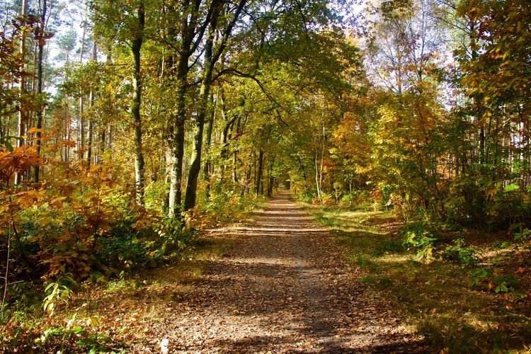 Autumn Beauty In Nature Belgium Day Forest Green Color Growth Lanaken Nature No People Outdoors Plant Scenics Tranquil Scene Tranquility Tree