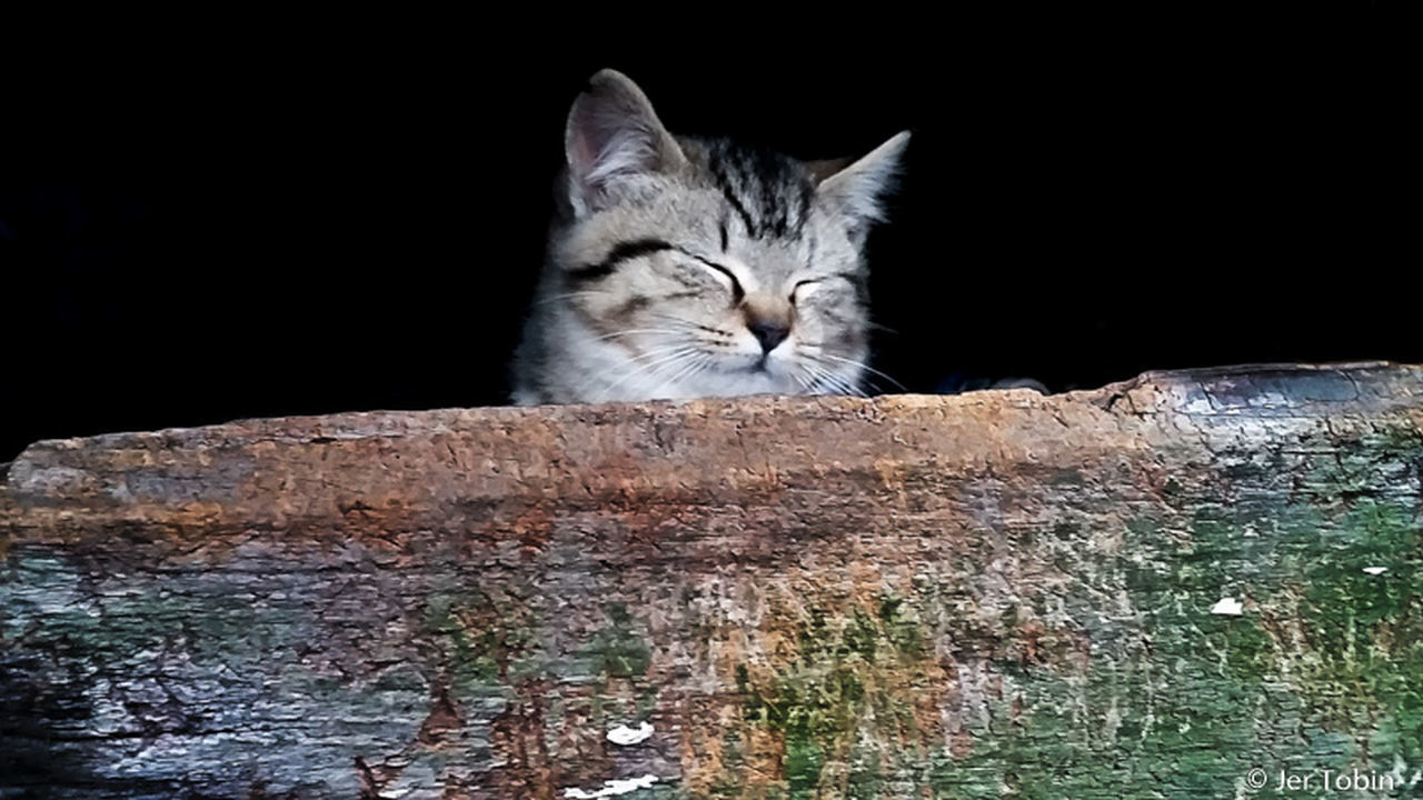 domestic cat, one animal, animal themes, feline, domestic animals, pets, mammal, no people, day, outdoors, nature, close-up