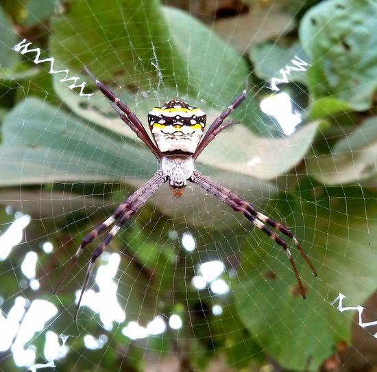 Spiderworld Wildlife & Nature First Eyeem Photo sk photography
