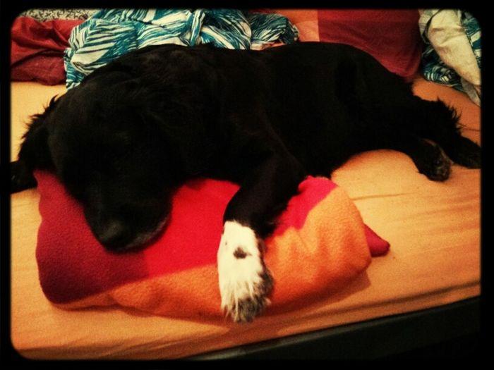 Dog Good Night World My Bed!