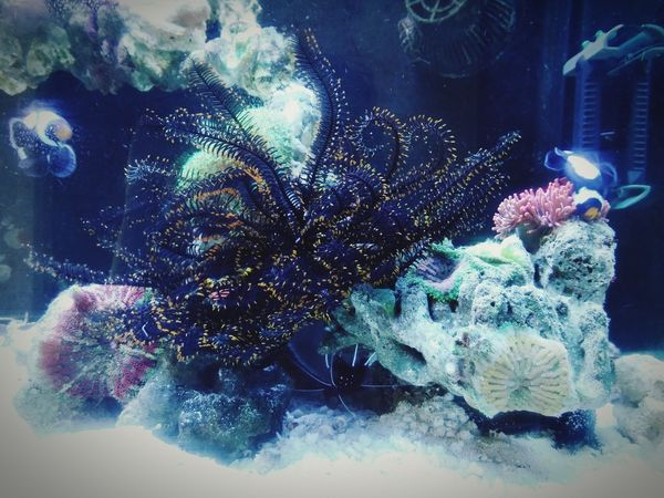My Reef Tank Underwater Fishtank Coral Reefs Seafish Starfish  Feather Star Pet Photography  My Reef Tank By Lg G3