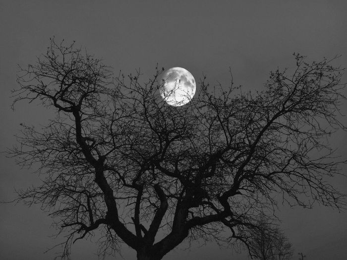 Moon & tree Minimalism Minimal Night Black And White Black And White Photography Black And White Black & White Moonlight Moon Tree Night Lights Nature Nature Photography Tree Plant Sky Low Angle View Nature Branch Moon Beauty In Nature No People Scenics - Nature Tranquility Growth Full Moon Outdoors Tranquil Scene Space Silhouette