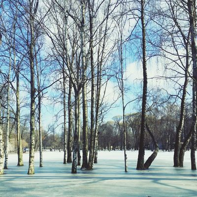 Tree Bare Tree Cold Temperature Winter Nature Tranquility Branch Snow Scenics Tranquil Scene Beauty In Nature No People Outdoors Growth Sky Forest Day Landscape Tavrichesky Garden Saint Petersburg Russia 🇷🇺 The Great Outdoors - 2017 EyeEm Awards Shades Of Winter