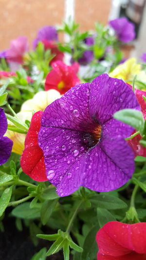 Flower Fragility Petal Purple Plant Nature Growth Beauty In Nature Flower Head Freshness No People Day Leaf Outdoors Close-up Blooming Animal Themes Rain Drop Beauty In Nature Plant