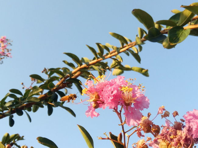 Flower Tree Flower Head Branch Prickly Pear Cactus Leaf Sky Close-up