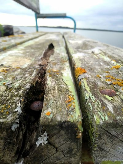 Old Bench Rusty Nails Beauty Of Decay By The Sea