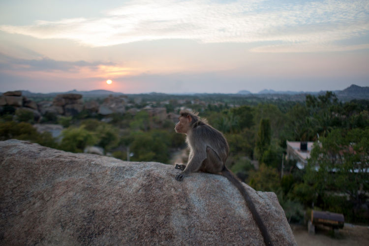 Side view of monkey sitting on rock