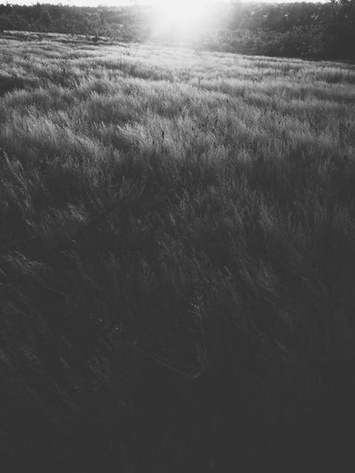 Grass under sunshine Landscape Land Plant Environment Nature No People Field Tranquility Beauty In Nature Day Growth Grass Tranquil Scene Sky Outdoors Scenics - Nature Non-urban Scene Rural Scene Sunlight Horizon Sunset Monochrome Blackandwhite Vscocam Mobilephotography