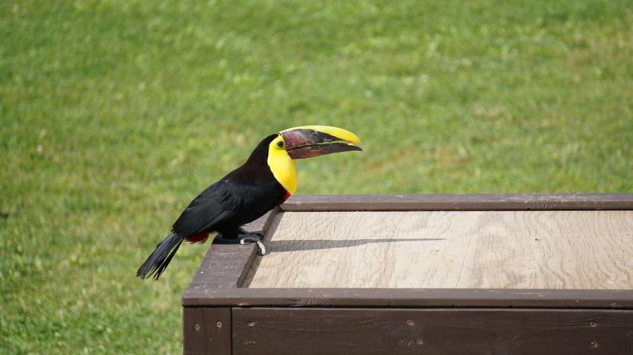 Bird at african