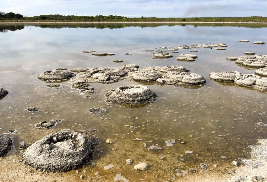 Lake Thetis: Western Australia Rare Lake Thetis Nature Australia Western Australia Lake Stromatolites Fossil Rock Living Marine Living Marine Fossil Natural Phenomenon Sediment Layered The Great Outdoors - 2016 EyeEm Awards Geology Cyanobacteria Coastal Nature_collection Saline Water Landscape Peaceful View Reflection