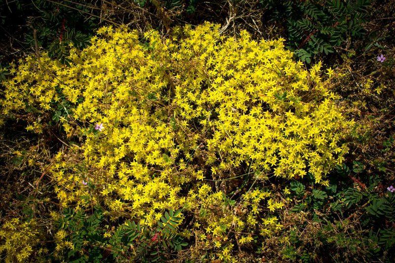 View of yellow flowering plants in garden
