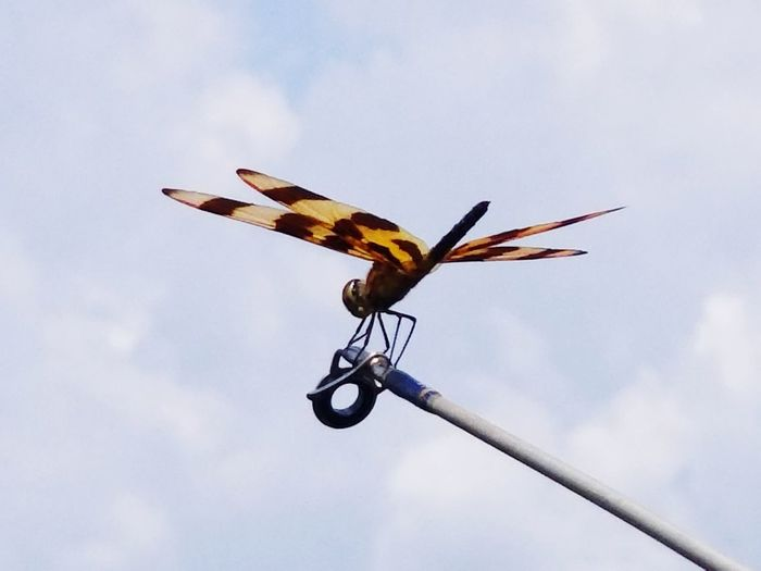 Low angle view of dragonfly flying against sky
