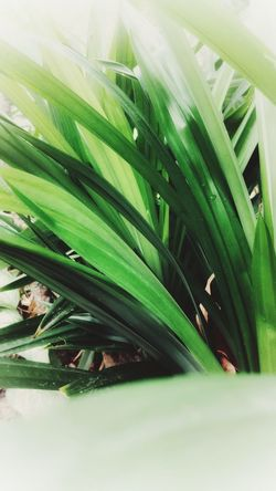 wallpaper Backgrounds Water Leaf Close-up Plant Green Color Cultivated Palm Leaf Dew