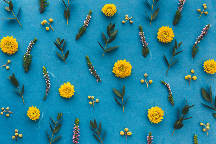 Full Frame Shot Of Yellow Flowers With Leaves On Blue Background