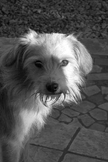 3viso Nature_collection Spring2015 Italy Dog Animal_collection Animal Photography Dog Lover B&w Photography B&W Portrait