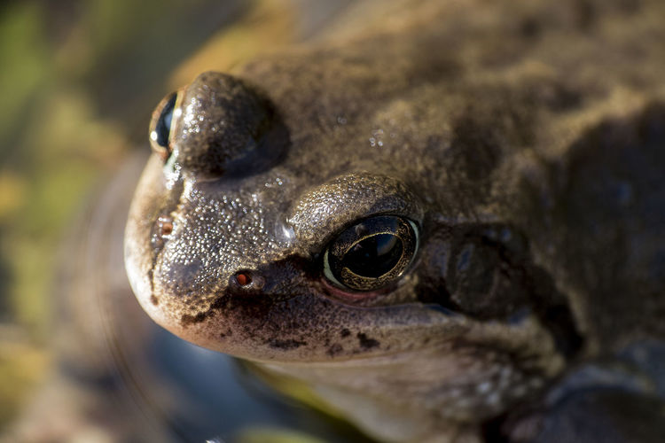 Animal Themes Animals In The Wild Close-up Frog Frosch Nature One Animal Outdoors