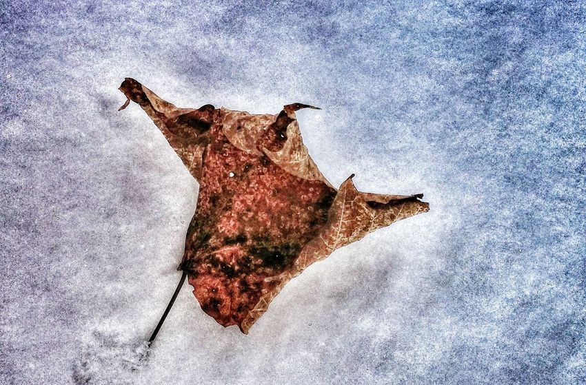 Lost In Time Outdoors Photograpghy  Leafphotography Very Cold Morning Showcase: February -38 C Beautiful Nature Enjoying Life Taking Photos Smartphonephotography