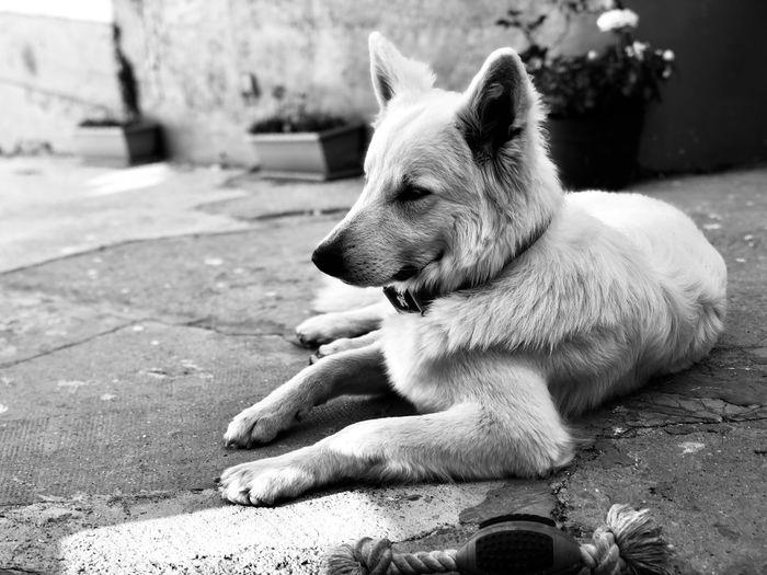 EyeEm Selects One Animal Animal Animal Themes Vertebrate Mammal Pets Domestic Animals Dog Canine