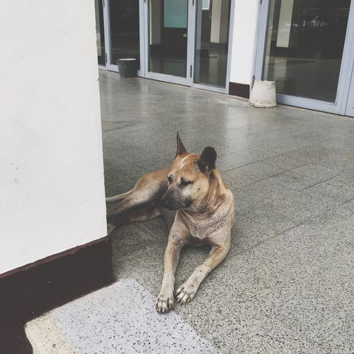 Stray dog relaxing in passage