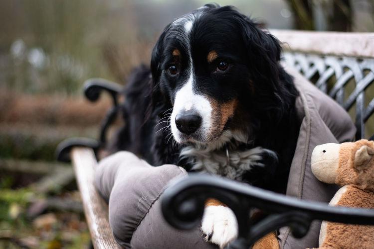 Sad Dog Animal