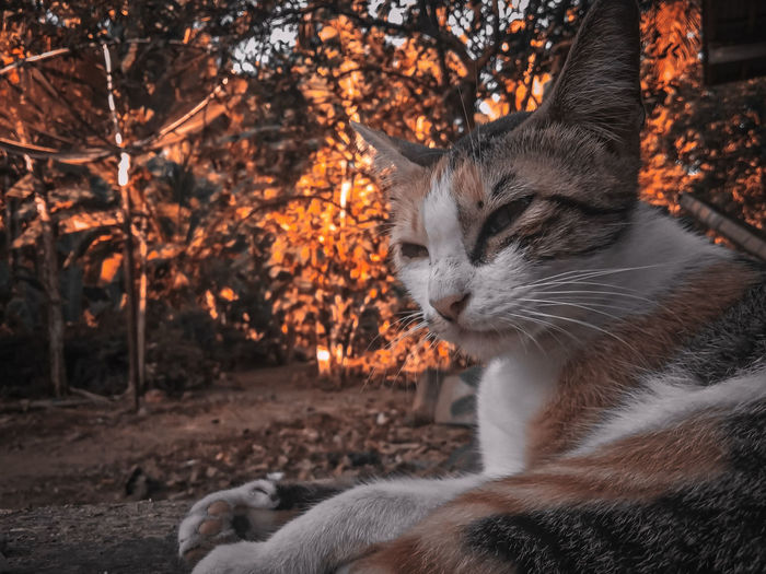 Close-up of a cat lying on land