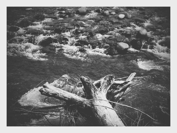 White River Mt Rainier Fallen Tree Nature Auto Post Production Filter Leaves Plant Life