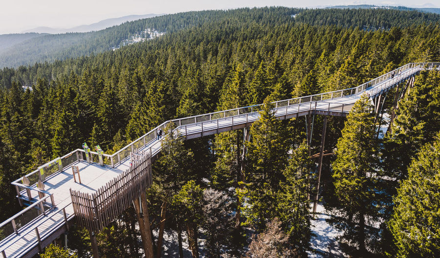 Panoramic view of bridge in forest