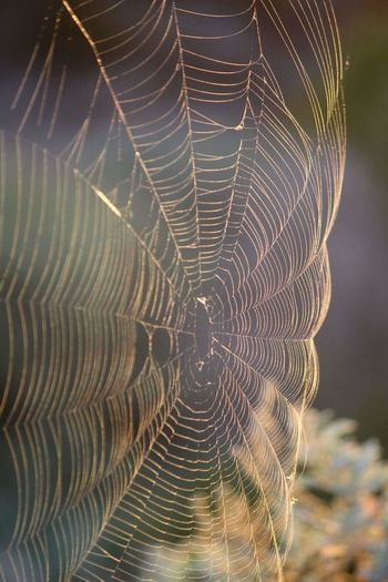 Pattern Pattern Pieces Patterns In Nature Spiderweb Natures Geometry Sunrise Colors