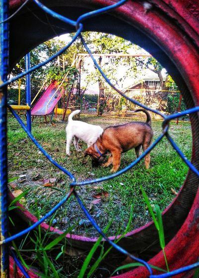 Dog relaxing in yard