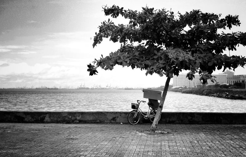 Tree On Sidewalk At Seashore With City In Background