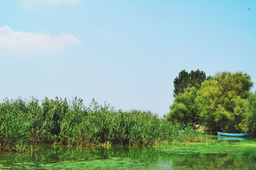 Blue Sky Blue And Green Boat Lake EyeEm Nature Lover Nature Photography Nature Colors Reflection EyeEm Best Shots OpenEdit