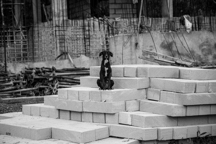 Stray dog sitting on concrete blocks at construction site