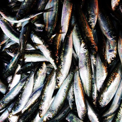 Fresh sardines close up top view Anchovies Catch Close-up Croatia Fish Fishing Food Food And Drink For Sale Healthy Many Marine Mediterranean  Raw Retail  Sale Sardine Sardines Seafood Top View