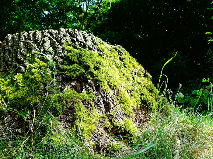 Wood - Material Wood MossGrowth Low Angle View Green Color Nature Beauty In Nature Plant Scenics Tranquility Tranquil Scene Moss Non-urban Scene Outdoors Green Lush Foliage Day WoodLand Freshness Duvenstedt Germany