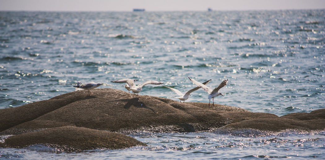 Birds perching on rock in sea
