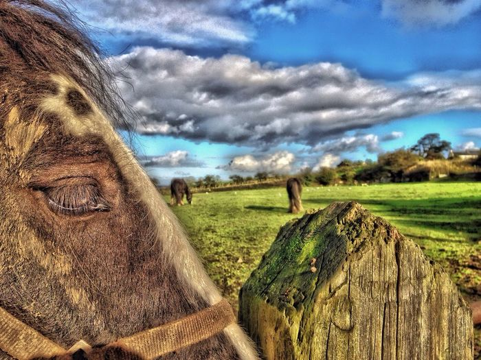 Hdr_Collection Skyporn Horses Eye4photography