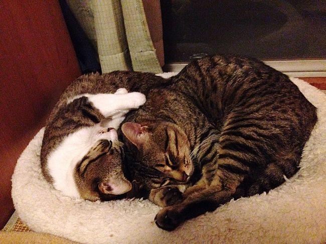 おやすみ Hello World Self Portrait Goodnight うちの猫 Cat Love EyeEm Friend