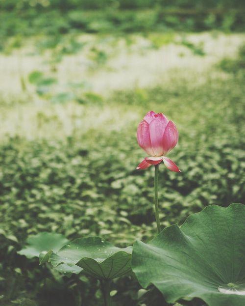 연꽃 Epuegraphic